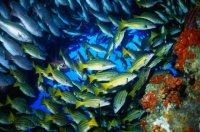 Coral reef off Isla del Coco Costa Rica scuba diving tours
