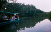 Night tour through the jungle rainforest on the Sarapiqui river