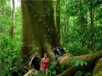 Guided rainforest hike
