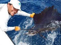 Catching and releasing a sailfish